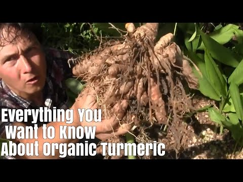 Everything You Want to Know about Organic Turmeric & It's Benefits