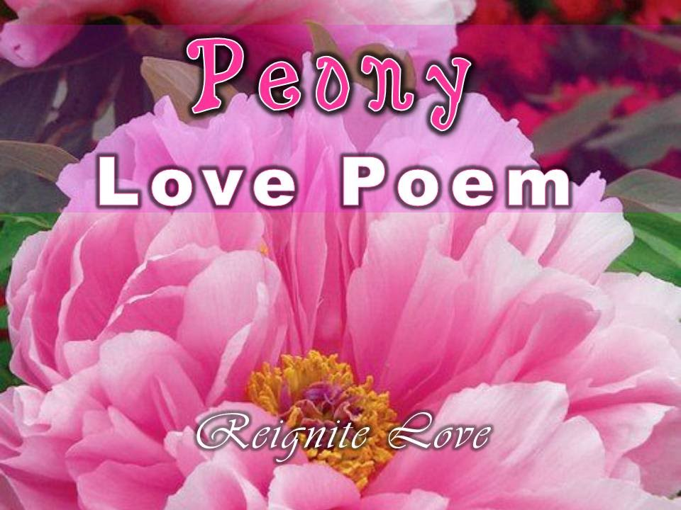 PEONY ROMANTIC LOVE POEM With Beautiful Erhu Music: Reignite Love ...