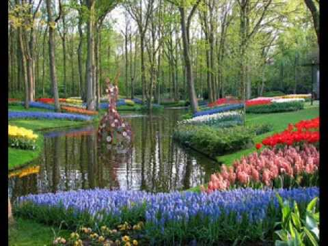 beautiful flowers garden in the world, Natural flower