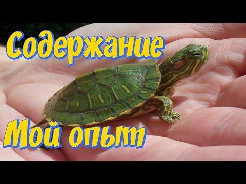 Красноухие черепахи аквариум! Мой опыт содержания!