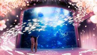 春を楽しむインタラクティブアート「桜といわし」 京都水族館【公式】
