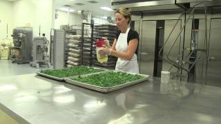 The Best Kale Chips in the WORLD!