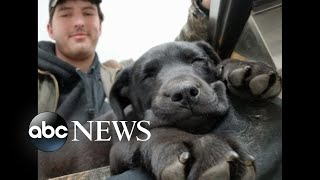 Deaf dog adopted in Maine