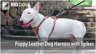 Comfy Leather Harness With Spikes For Bull Terrier Puppy