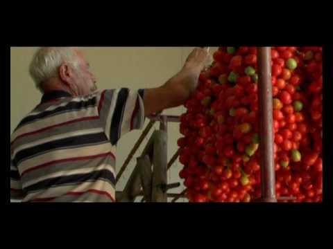 Il pomodorino del piennolo del vesuvio