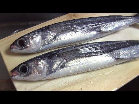 トビウオのさばき方~握りずしになるまで 寿司屋の仕込み how to fillet a Flying Fish and make sushi