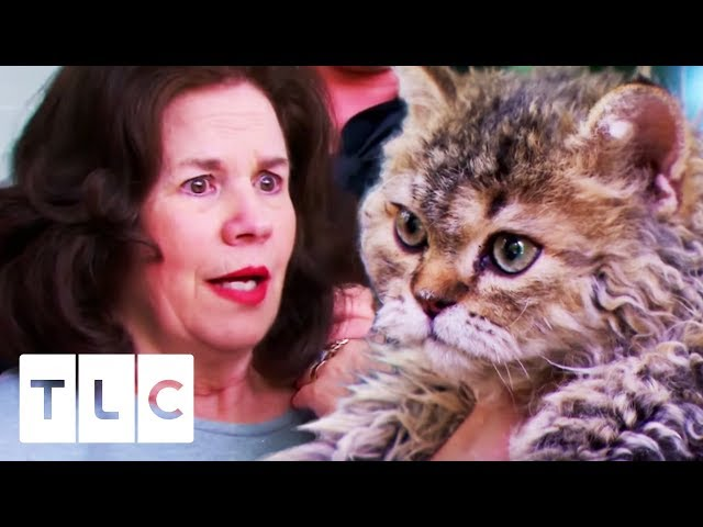 Whitney Surprises Her Mum With A New Cat!   My Big Fat Fabulous Life