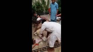 Ahsan Rajpoot 2nd kajla chatra qurbani video 2017