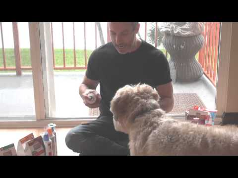 Best KONG Classic Dog Toy Review. The PetMan Shows You How To Stuff It Properly.