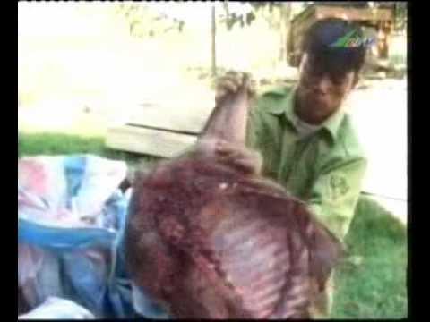 (Bushmeat) Thịt thú rừng tại Cát Tiên _ Lâm Đồng