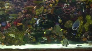 20,000 gallon Aquarium At the Mirage, las vegas