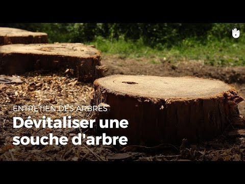 Arrachage souche thuyas de 40 ans doovi - Comment detruire une souche d arbre ...