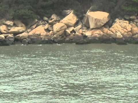 Pink Dolphins Hong Kong.mpg