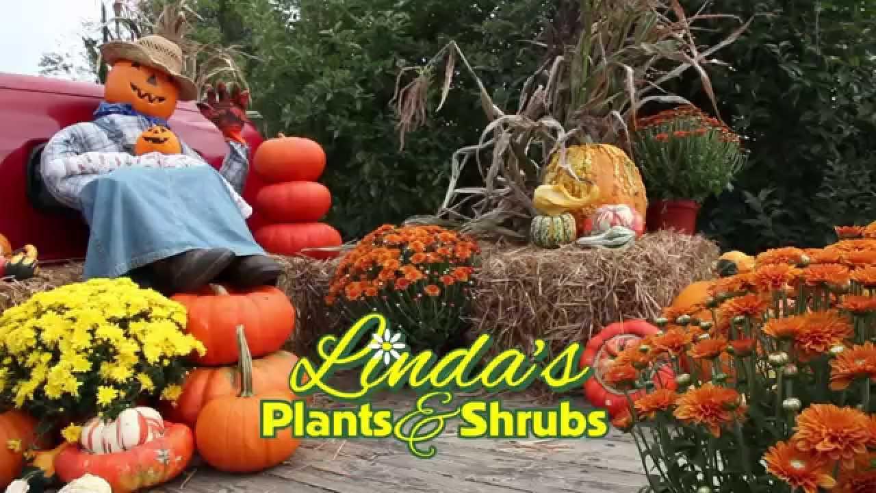 Image result for lindas plants