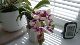 Цветение орхидей в мае 2021