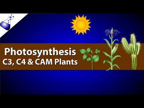 Photosynthesis: Comparing C3, C4 and CAM