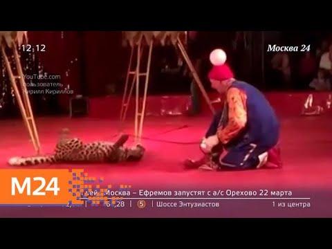 В Госдуме рассмотрят новые правила содержания животных в цирке и зоопарке Москва 24