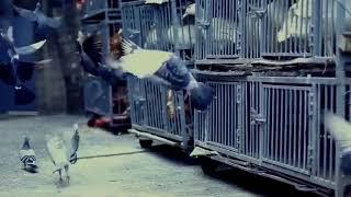 Клип про животных