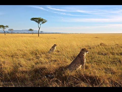 Большие кошки Кении  3 серия