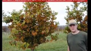 Video Madonna Not allowed at tree farm Doylestown WE SAY YES XXX ASK BILLY TREEGROWER download MP3, 3GP, MP4, WEBM, AVI, FLV September 2018