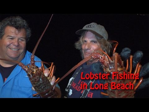 Lobster Fishing in Long Beach | SPORT FISHING