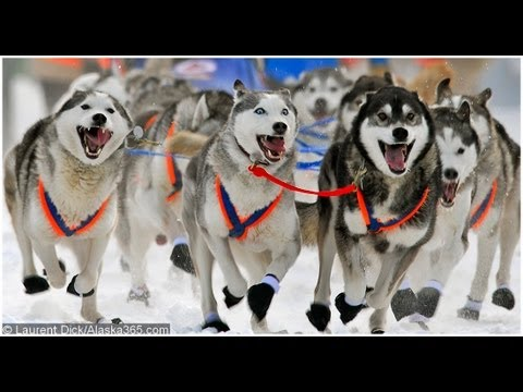 Iditarod Tours by Wild Alaska Travel:  Iditarod Finish & Northern Lights Tour in Nome Alaska