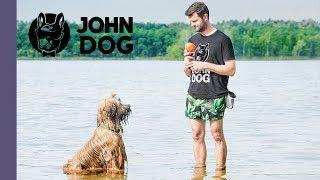Jak nauczyć psa pływania? - TRENING - John Dog