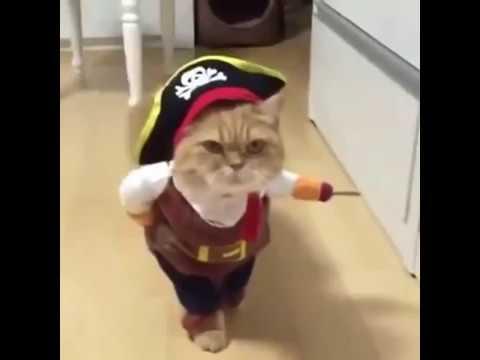 Il Gatto Pirata Youtube