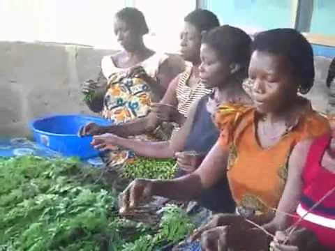 Moringa Project in Ghana: WOMEN FARMERS PROCESSING MORINGA