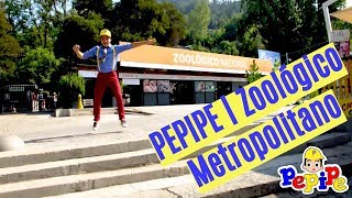 Pepipe | Zoológico Metropolita…