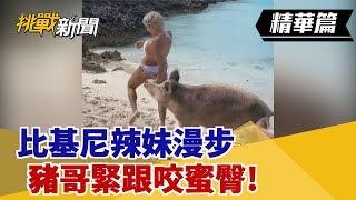 【挑戰精華】比基尼辣妹漫步 豬哥緊跟咬蜜臀!