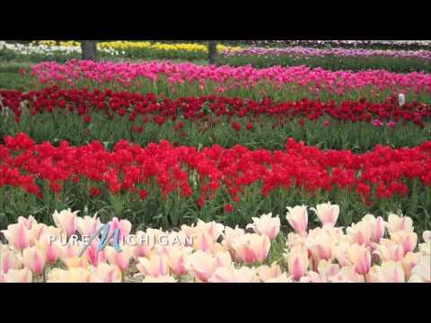 The Holland Tulip Time Festival | Pure Michigan