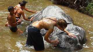 Washing Elephants at Mae Rim Elephant Home