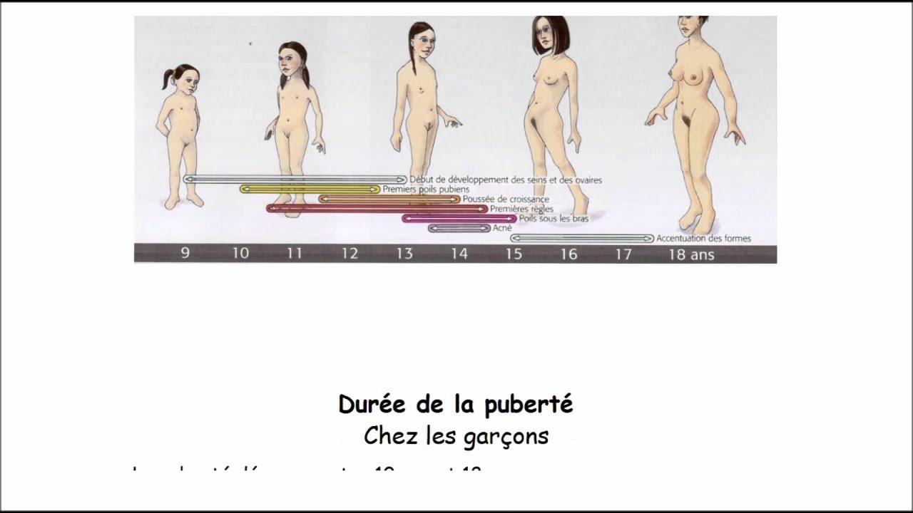 La puberté le fonctionnement des appareils génitaux