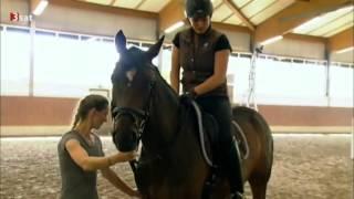 Болезненная тема конного спорта (Роллкур)