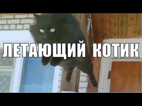 Летающий кот Чернуха забавные животные / Flying cat Blackie funny animals
