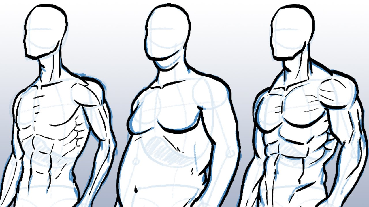 How to Draw Different Body Types - YouTube