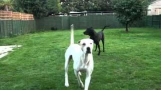 Repeat youtube video Breeding a Bully Kutta Blog