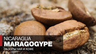 Кофе в зернах отзывы // Обзор кофе Никарагуа Марагоджип в турке // Nicaragua Maragogype Coffee