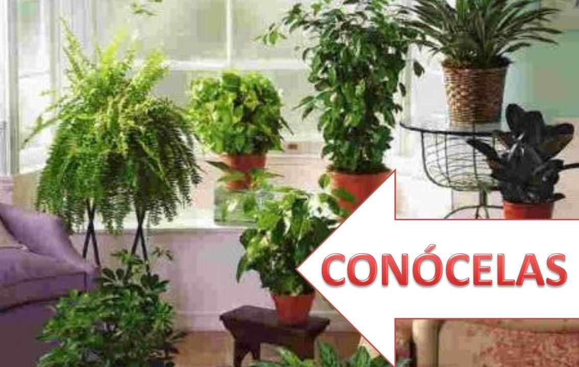 Plantas purificadores de aire naturales que deber as tener Plantas limpiadoras de aire