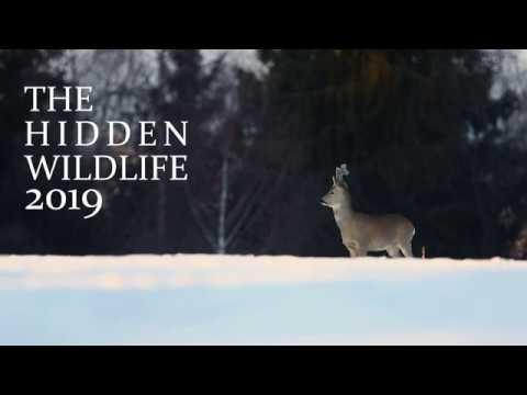 THE HIDDEN WILDLIFE 2019