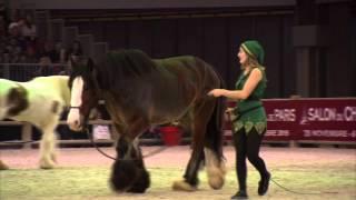 Salon du cheval 2015 - les Irish Cob du lycée Firfol