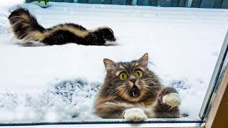 Awesome Funny Cats  And  Dogs    Best Of The 2020 Funniest And Cute Pet Videos