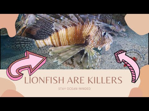 Why Lionfish Are Harmful To The Ocean & How You Can Help