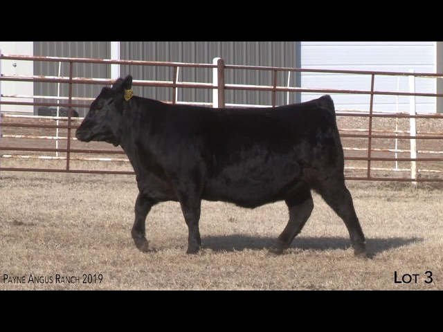 Payne Angus Ranch Lot 3