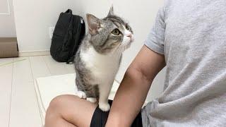 2つ買ったのにどうしても同じ座布団を使いたがる猫がかわいすぎた…w