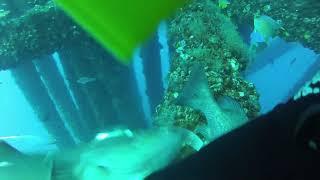 Spearfishing Louisiana Oil Rigs Aqua Aces Rodeo 2014