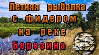 Летняя рыбалка с фидером на реке Березина Ловля подуста фидером на реке