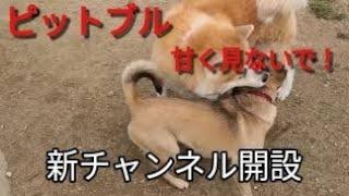 【新チャンネル】 Dog Rescue A&Rの素顔 https://www.youtube.com/chann...