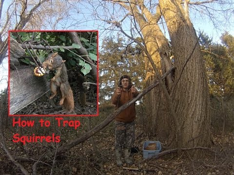 Making Squirrel Sets~Trapping